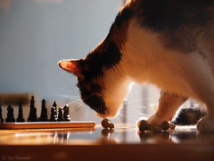 Chess photo by Ilia.K