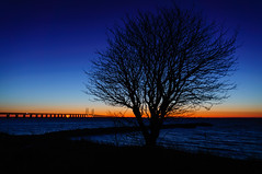 Tree silhouette against the bridge photo by Fredde Nilsson