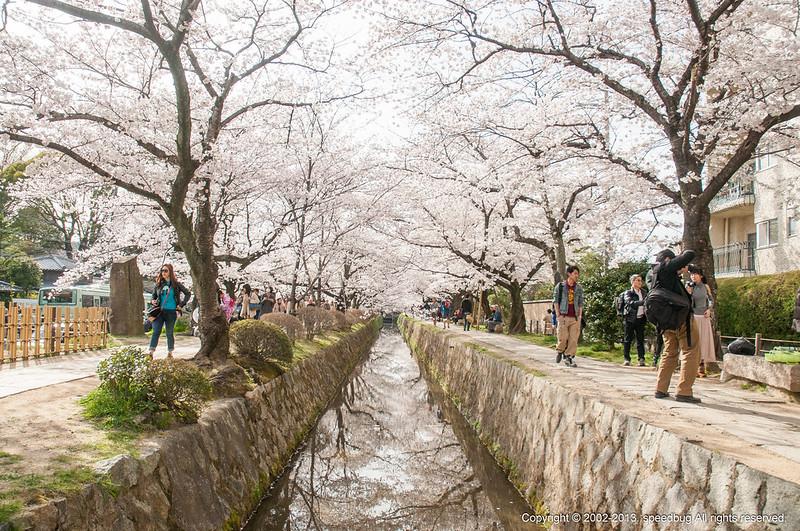 今日熱門文章:京都|哲學之道.滿到漫出來的櫻花