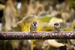 Two birds photo by Diego Cambiaso