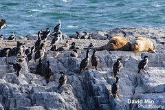 Ushuaia, Argentina - Sea Lions & Cormorants photo by GlobeTrotter 2000