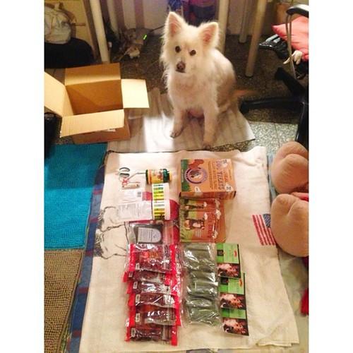 新年禮物 Lunar New Year's gift #熊寶 #dog #doglife #dogdaily #dogstagram #instadog #gift #lunarnewyear #LNY