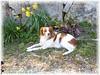 2013_04 13 emy au jardin 1