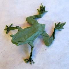 Tree Frog, Op. 280 (Robert Lang) photo by M@ttyGroves