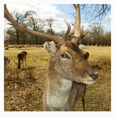 Deer Headshot photo by Mark-Crossfield