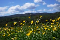 spring field photo by ΞSSΞ®®Ξ