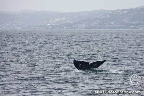 whale watching (6 of 10).jpg