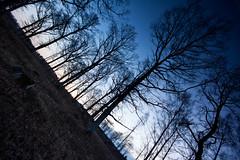 oaks (Explored) photo by Andreas Hagman