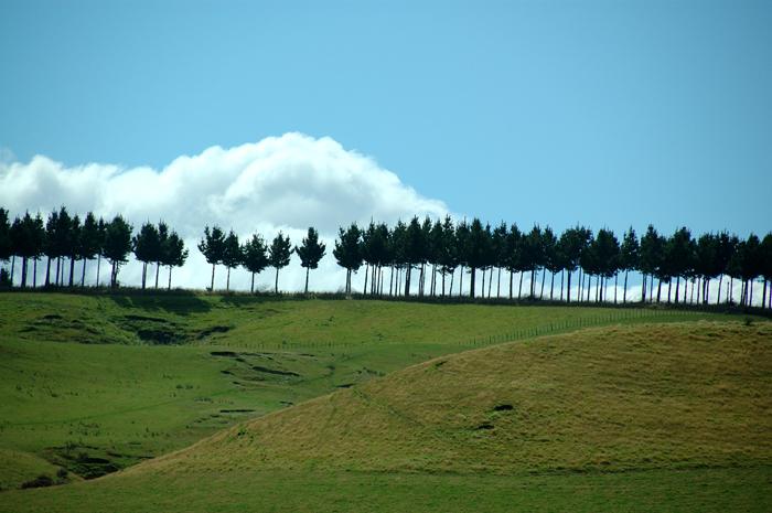 藍天,白雲,樹一排