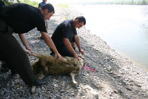 Ram getting sacrified at the Mtkvari River.