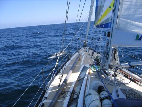 Dolfins Santa Barbara Channel