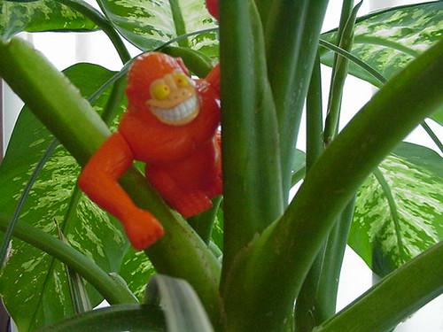 tang derek climbs a plant