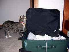 Bonnie and Suitcase