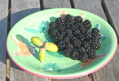 acorns,-blackberries