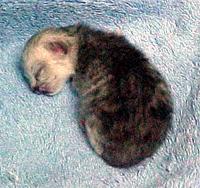 咩咩剛出生時像隻小老鼠