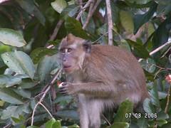 Rambutan Tree (10)