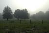 Foggy Dawn, Southern Ranch