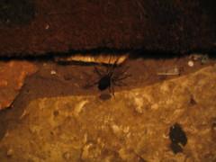 עכבישה בחוץ