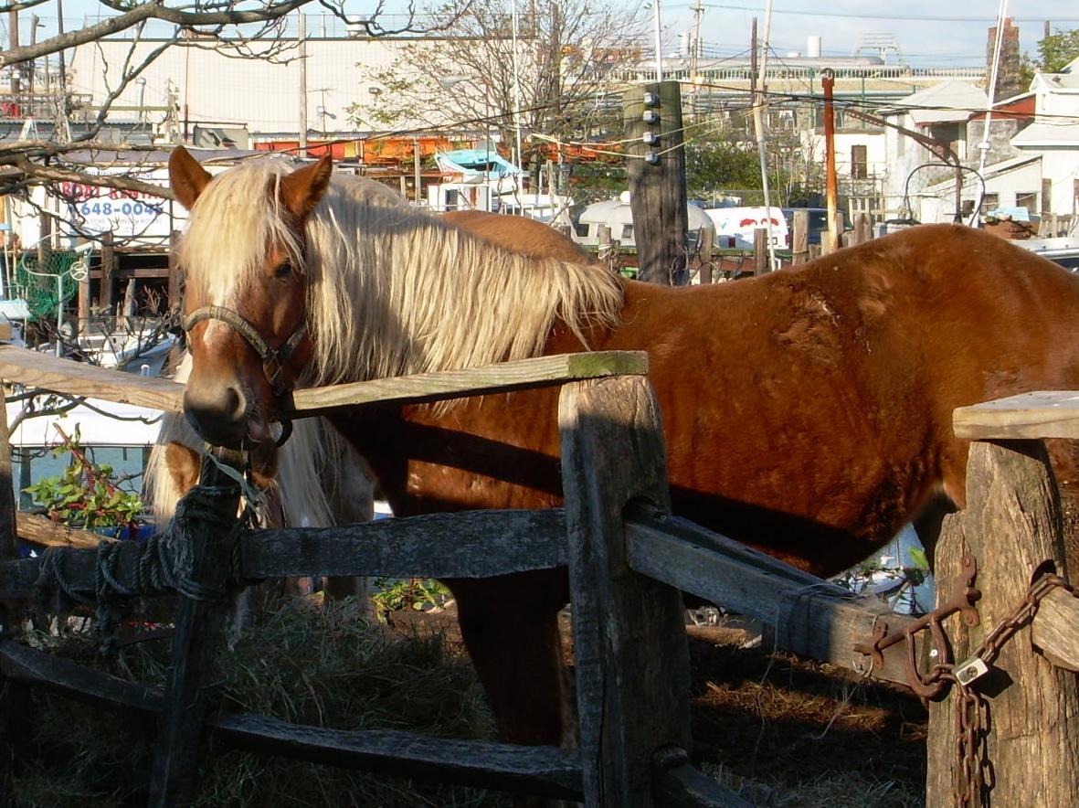 horse(!), gerritsen beach