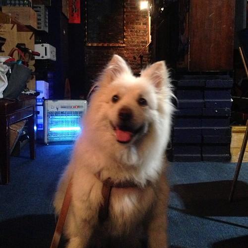 熊寶在藍調 #熊寶 #dog #doglife #dogdaily #dogstagram #instadog