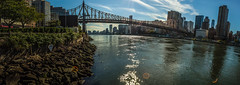 Ed Koch Queensboro Bridge from Roosevelt Island Photo photo by Alex Sablan