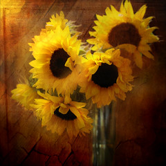 Sunflower Still life photo by Jean Turner Cain Away for two weeks!