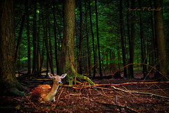 The Deer Hunter photo by Ronaldo F Cabuhat