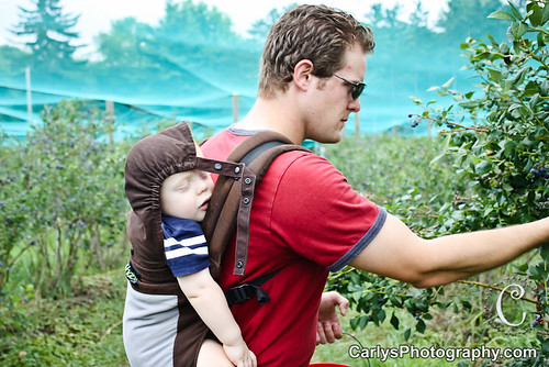 blueberry picking-9.jpg