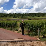 visit vineyards