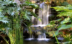 Tropical Waterfall photo by MikeDalePhotos..... 150,000 views ==> Thank you