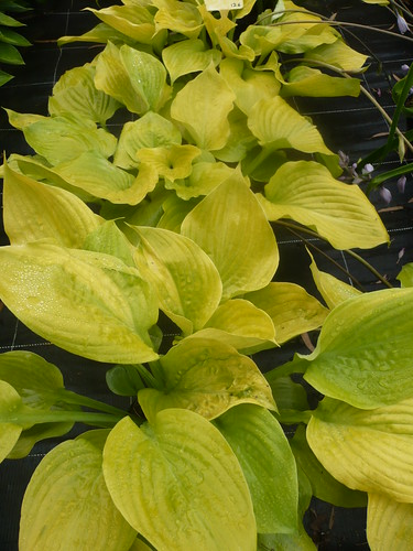 hosta.sum & substance