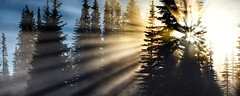 Pine Trees & Sunbeams photo by The Flannel Photographer
