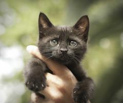 baby male cat photo by Mai Do Asensi