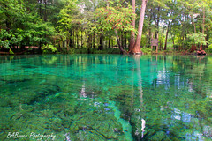 Ginnie springs 2 photo by B A Bowen Photography