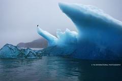 Ice Estate photo by TIA International Photography