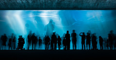 H2Glow (Deep Water Long Exposure), Monterey Bay Aquarium photo by flatworldsedge
