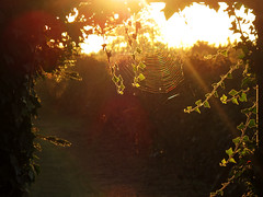 Morning light behind the Garden Gate photo by Batikart ... handicapped ... sorry for no comments