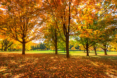 Twining Park - Fall Colors photo by Painted Light Studio