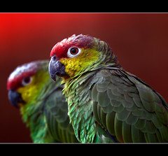 Red, Yellow and Green photo by Steve Wilson - over 6 million views Thanks !!