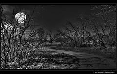 The Path of Dark Shadows photo by JusDaFax