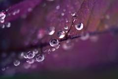 Droplets photo by j man.