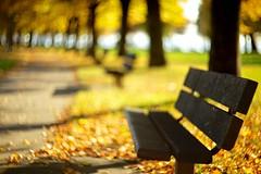 Autumn Path photo by Dr. RawheaD