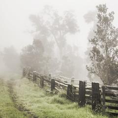 The Path photo by nicholasdyee