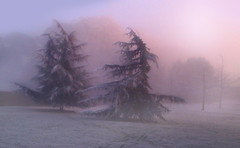 Frosty,Foggy Castle Grounds photo by Jean Turner Cain Away for two weeks!