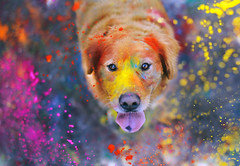The Explosion of Colors  42/52 photo by sprinkle happiness