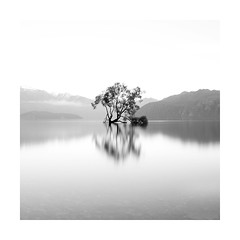 The Lone Tree photo by Monochrome Visions