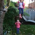 Climbing the tree<br/>18 Nov 2012