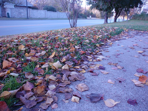Sidewalk Strewn with Leaves