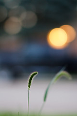 What's your favorite 85mm lens for bokeh? | canon 7d photo by *AndrewYoungPhoto* (writing_with_glass)