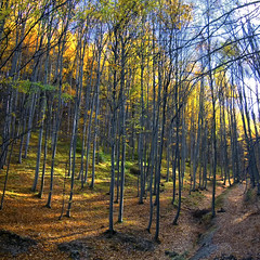 ..fall for you....enchanted forest photo by George Nutulescu